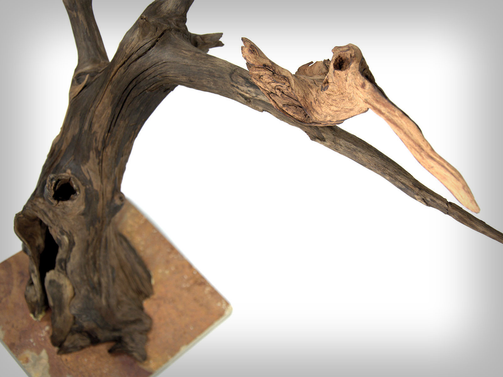 Pelikanov dom